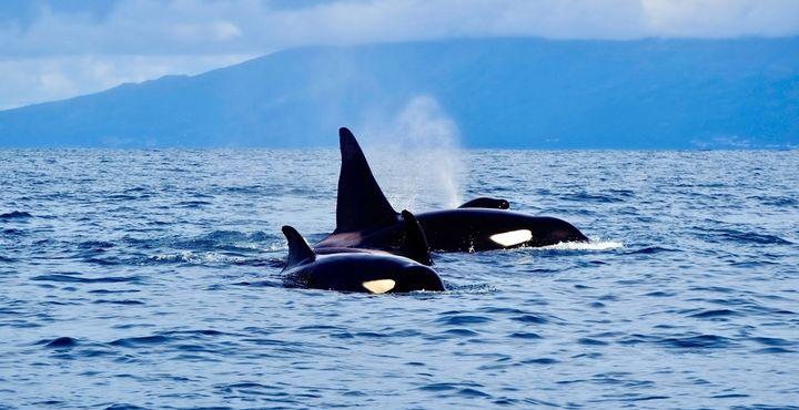 Mit etwas Glück kommen Sie auf einer spannenden Walbeobachtungstour Wale und Delfine hautnah.