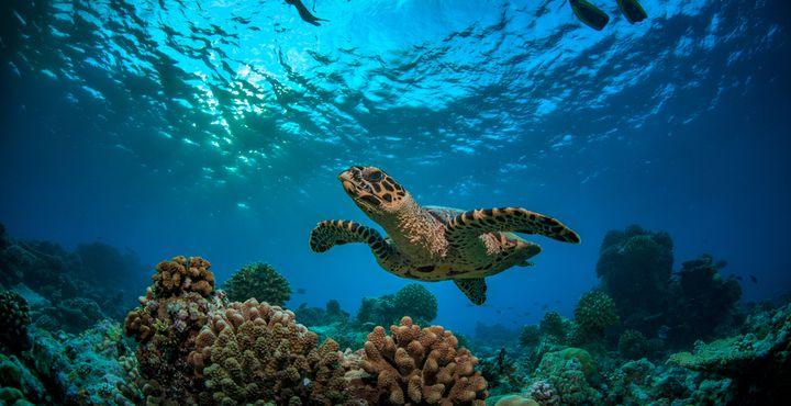 Schwimmen Sie mit bunten Fischen und entdecken Sie die Unterwasserwelt bei einer Schnorchel-Tour.