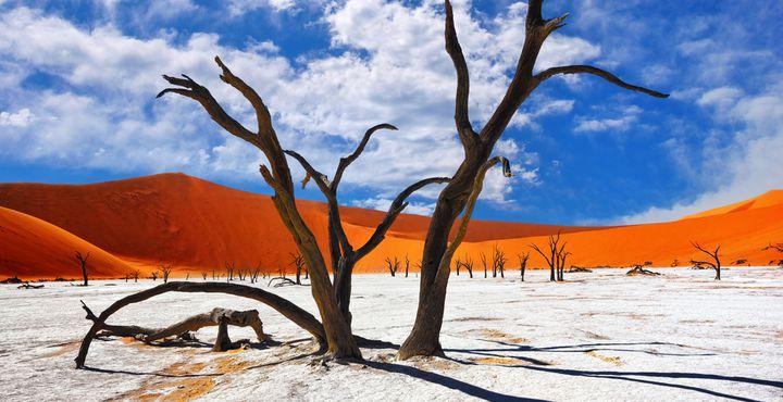 Das Dead Vlei mit seinen charakteristischen Kameldornbäumen gehört zu den vielleicht schönsten Fotomotiven.