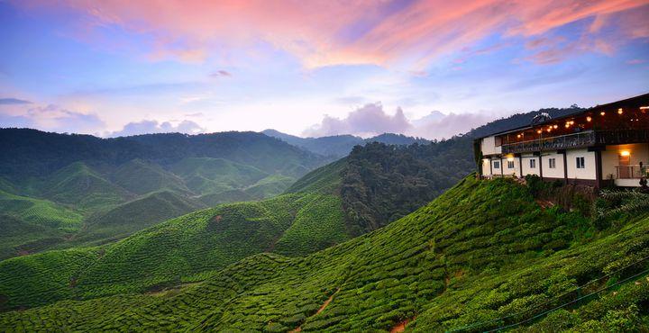 """Lernen Sie die heilige Tradition der Tee-Kunst kennen bei einem Besuch der """"BOH Tea-Factory""""."""