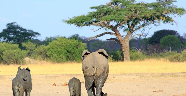 Der Hwange Nationalpark ist für seine Elefantenpopulationen bekannt.
