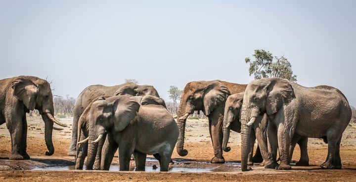 Die Chobe Riverfront ist ein wahres Elefantenmekka. Mit etwas Glück können Sie hunderte von Elefanten gleichzeitig bestaunen.
