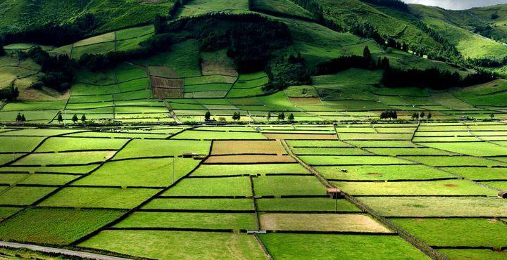 Ziehen Sie Ihre Wanderschuhe an und erkunden Sie die sattgrüne Natur von Terceira.