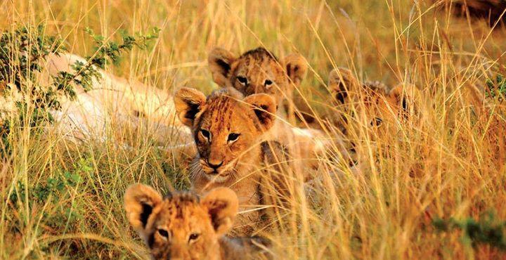 Der krönende Abschluss im Kariega Game Reserve: Die Big Five hautnah erleben.