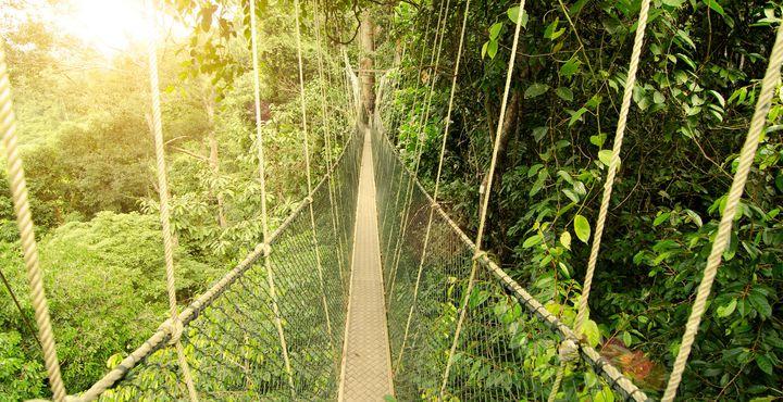 Freuen Sie sich auf drei unvergessliche Tage im ältesten Regenwald der Welt.