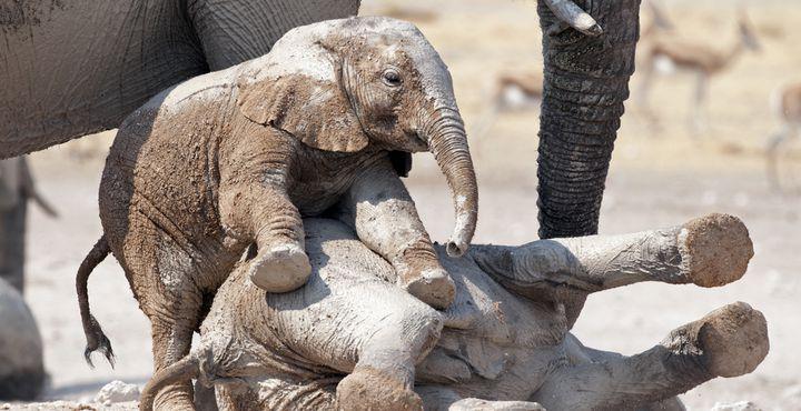 Über die Schönheit Namibias und das Tierreichtum wurde endlos viel geschrieben. Es wird Zeit, dass Sie es nun live erleben!