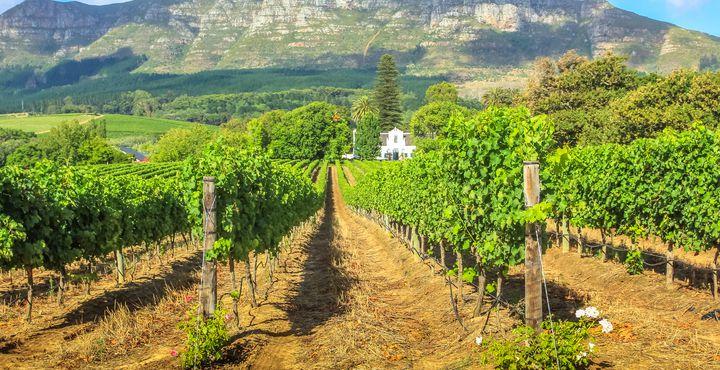 Nach zwei aufregenden Tagen in Kapstadt lernen Sie die malerischen Winelands kennen.
