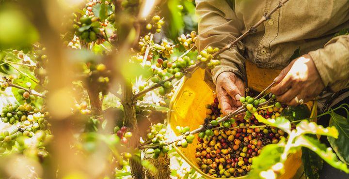Auf einer Kaffeeplantagen, in den Bergen von Medellín, lernen Sie die verschiedenen Etappen der Kaffeeherstellung kennen.