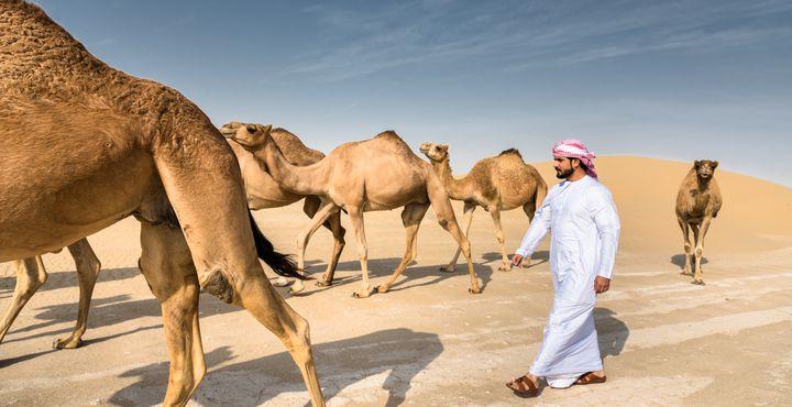 Ihre Fahrt geht in Richtung Wahiba Wüste. Es wird Zeit für eine Wüsten Jeepfahrt.
