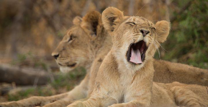 Der Chobe Nationalpark ist der wildreichste Park in Botswana.