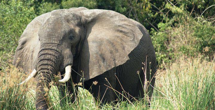 Ein lautes Schnauben und ein Tröten in der Ferne - Auch Elefanten fühlen sich hier heimisch.