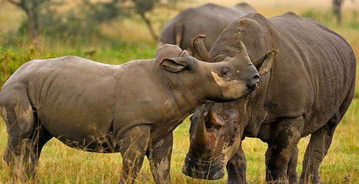 Die bunte Tierwelt wird Sie und Ihre Kleinen faszinieren.