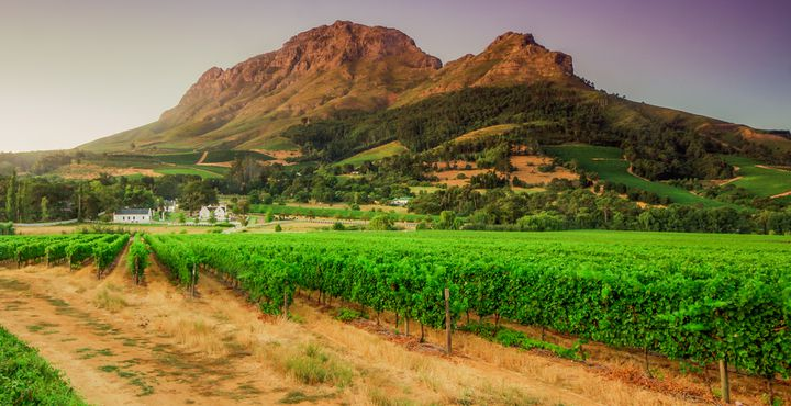 Wenn Sie mal Lust haben die Gegend um die Stadt zu erkunden, dann lohnt ein Ausflug in das Weingebiet - die Winelands.