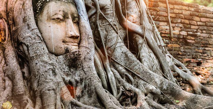 Auch der Buddha im Baum zählt zu den Highlights Ihrer Reise.
