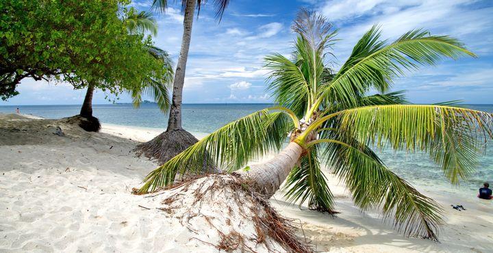 Mit schneeweißem Sandstrand, kristallklarem Meer und sattgrünen Palmen präsentiert sich Selingan Island, die Schildkröten Insel.