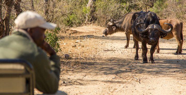 Weiter geht's zum Kapama Private Game Reserve: Hier erwarten Sie spannende Game Drives. Bild: Marko Roth Productions.