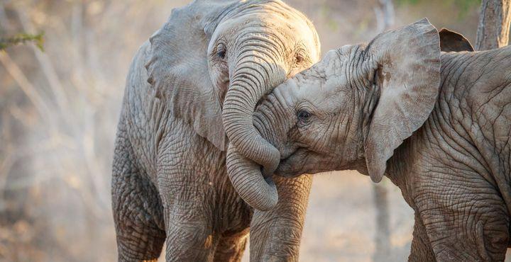 Freuen Sie sich auf eine unvergessliche Pirschfahrten im Krüger Nationalpark und halten Sie gespannt nach den Big 5 Ausschau.