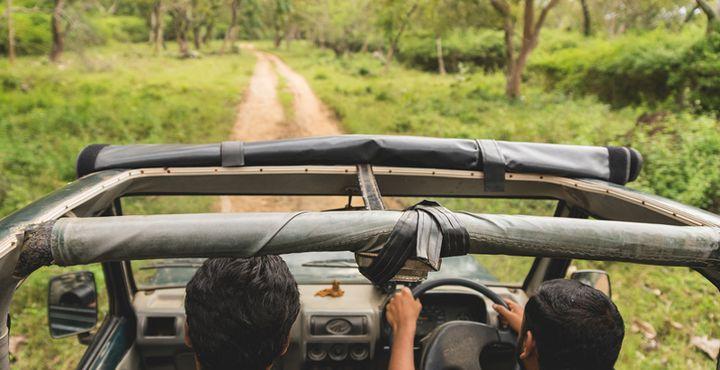 Lust auf eine unvergessliche Jeep-Safari? Dann sind Sie im Bandipur Nationalpark goldrichtig. Bild: Marko Roth Productions