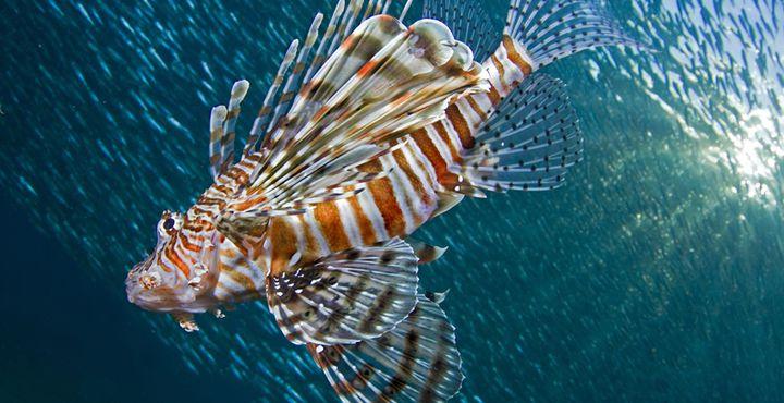 Die faszinierende Tierwelt unter Wasser kennen lernen.